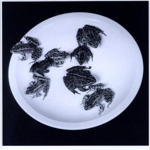 Mapplethorpe, Frogs