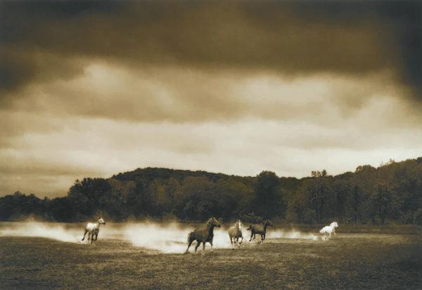 Eastman, Horses #296