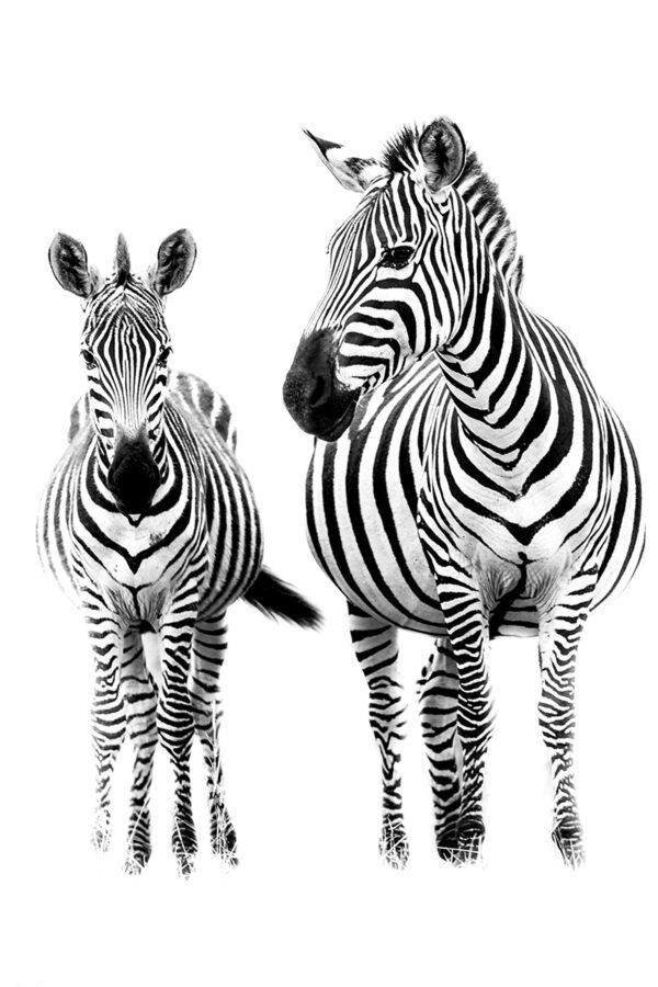 200-stripes-sito